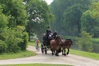 Pferde und Fahrräder gehören zum Stadtbild