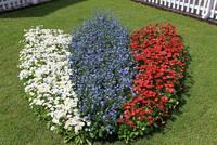 Blumenbeet in Stadtfarben