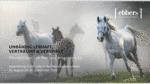 Pferdebilder von Mariusz Broszkiewicz im Modehaus ebbers