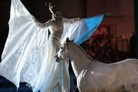 13. Warendorfer Pferdenacht-Stadtfest