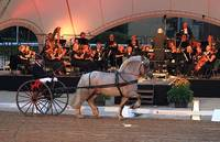 "Symphonie der Hengste ""A Night on Broadway"""